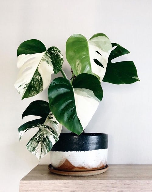 Beautiful Houseplants with Patterns