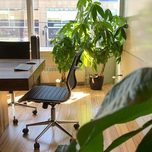 Office Plant Decor for Green Working Environment 6
