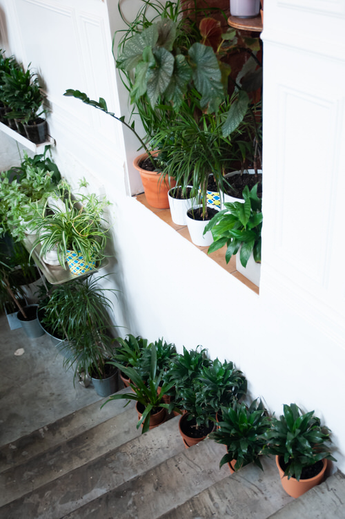Indoor Garden on the Staircase 24