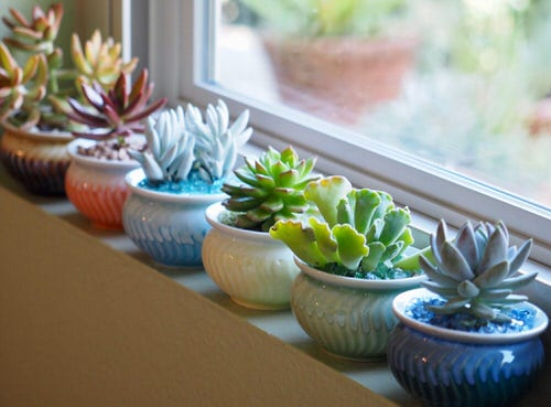 Houseplants that Grow In Dry Air 6