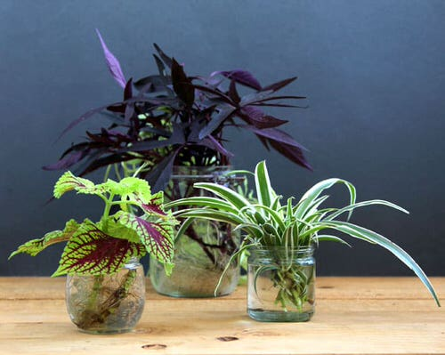 Indoor Plant Propagation Station Ideas 7