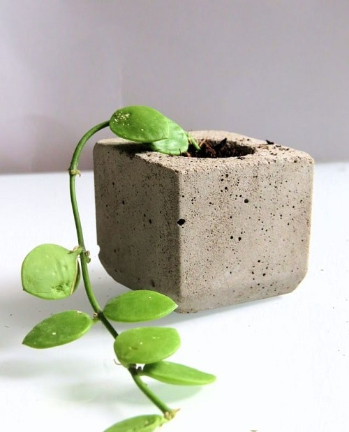 Indoor Plants you can Grow from Cuttings 8