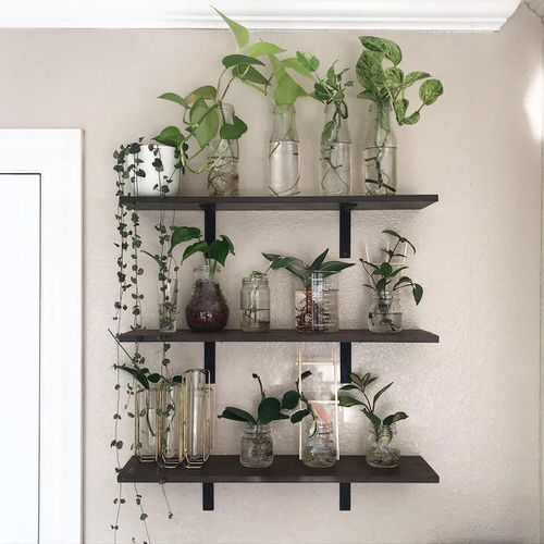 Indoor Plant Propagation Station Ideas 8