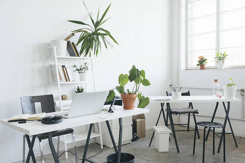 Office Plant Decor for Green Working Environment 10