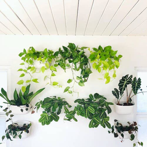 Wall Hanging Plant Decor Ideas 11