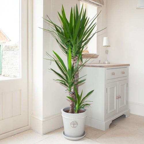 Trees You Can Grow Indoors 9