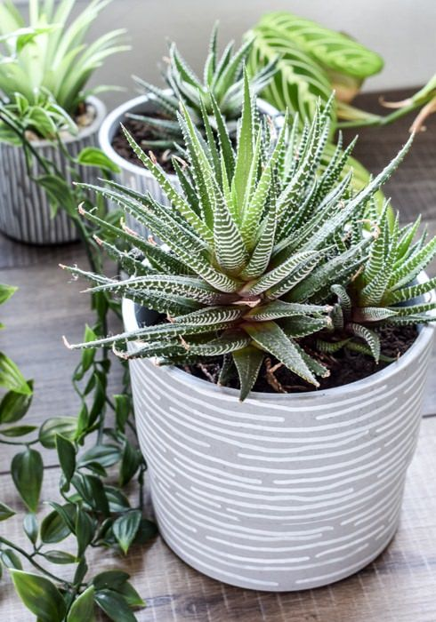 DIY Ikea Indoor Garden Ideas 9