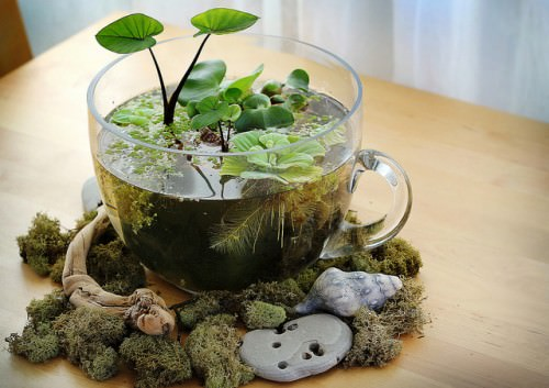DIY Table Top Water Garden