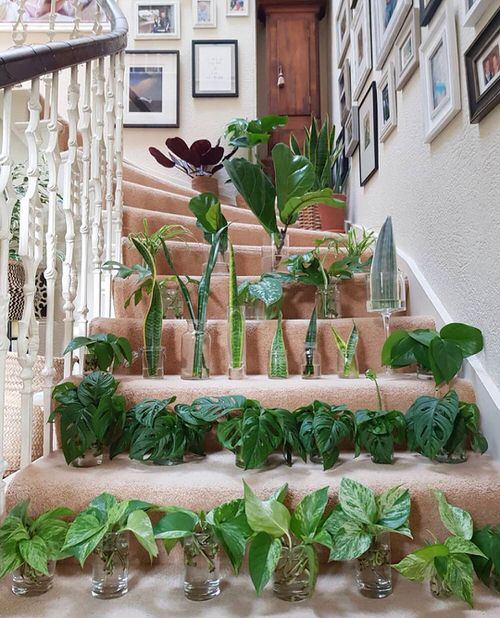 Indoor Plant Propagation Station Ideas