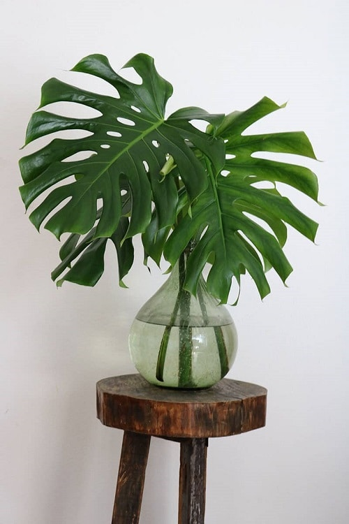 Indoor Plants you can Grow from Cuttings 14