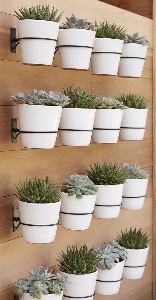 Wall Hanging Plant Decor Ideas 6