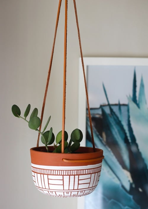 Indoor Plants you can Grow from Cuttings 15