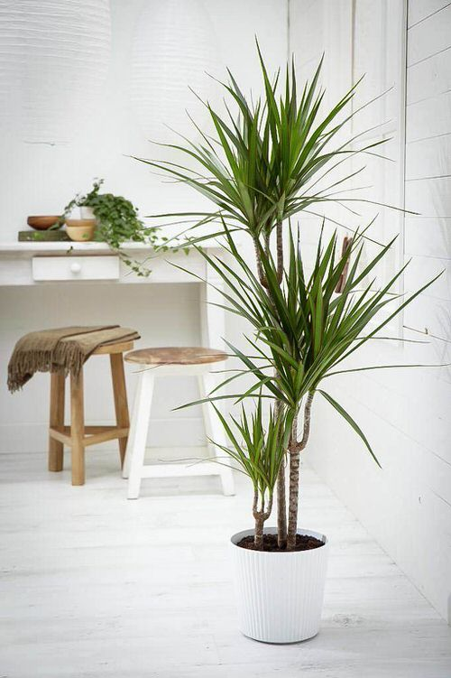 Trees You Can Grow Indoors 2