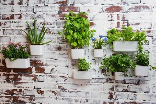 How to Decorate a Rental Home with Plants 2