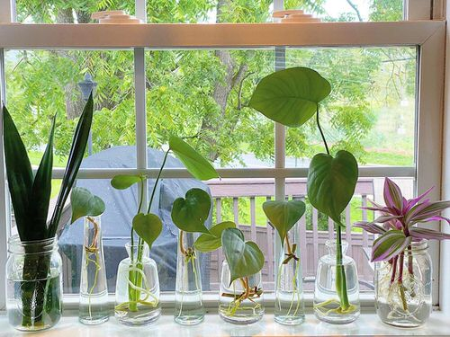 Indoor Plant Propagation Station Ideas 2
