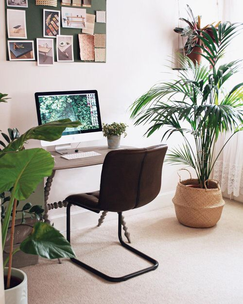 Houseplants That Improve Productivity 3