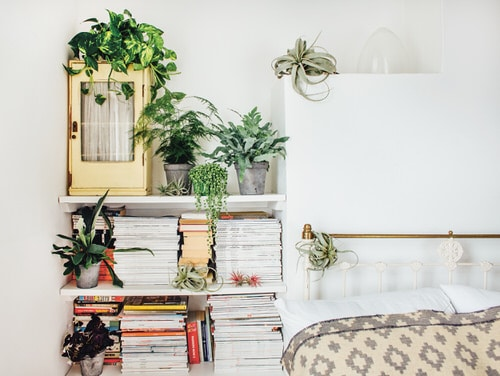 How Indoor Plants Help You Sleep Better 2