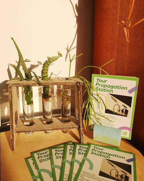 Indoor Plant Propagation Station Ideas 3