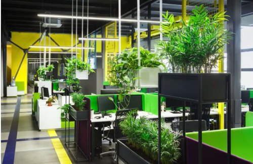 Office Plant Decor for Green Working Environment 8
