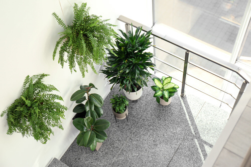 Indoor Garden on the Staircase 26
