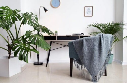 Office Plant Decor for Green Working Environment 7