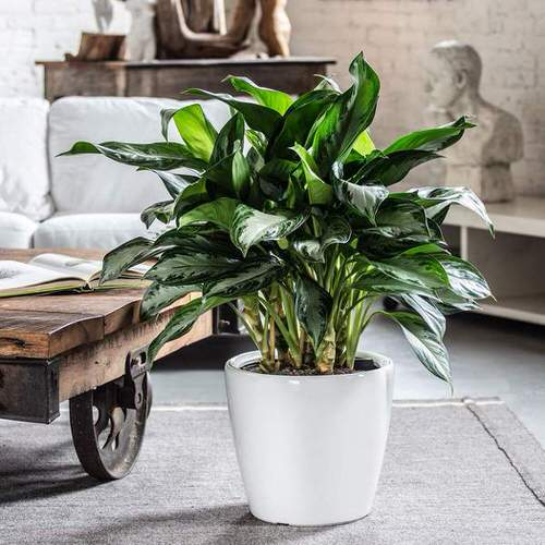 Houseplants That Improve Productivity 4