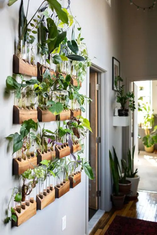 Indoor Plant Propagation Station Ideas 4