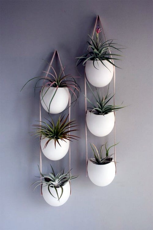 Wall Hanging Plant Decor Ideas 4