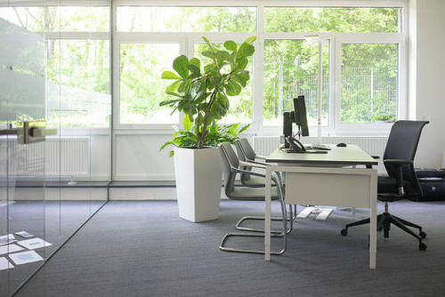 Office Plant Decor for Green Working Environment 2