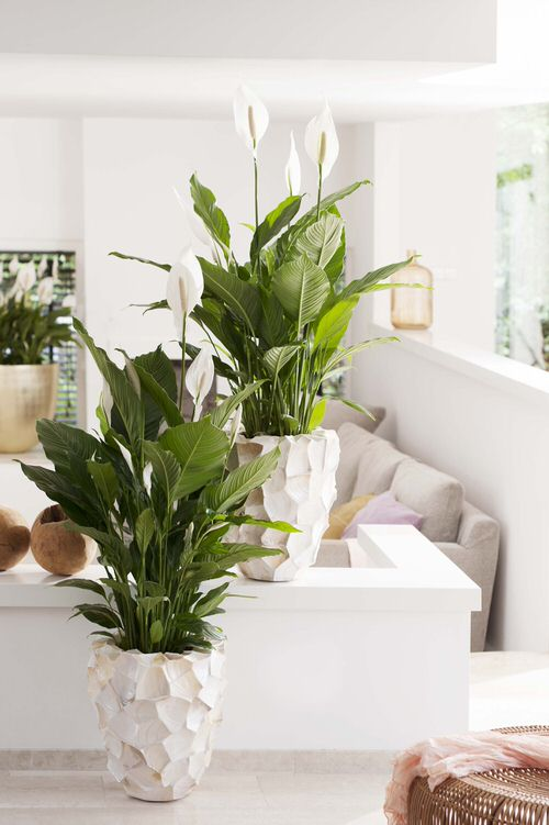 Healing Houseplants that can Improve your Health 5