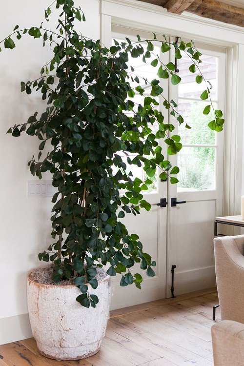 Trees You Can Grow Indoors 6