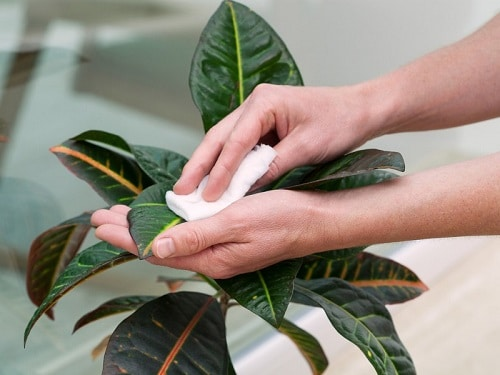 Houseplant Care Routine 2