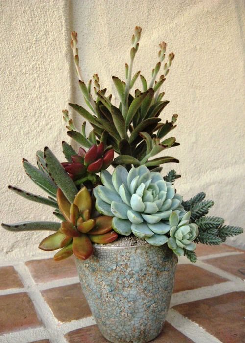 Spiller Filler Thriller Succulents