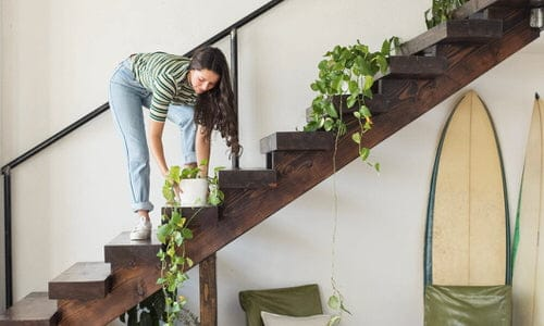 Indoor Garden on the Staircase