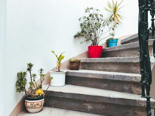 Indoor Garden on the Staircase 6