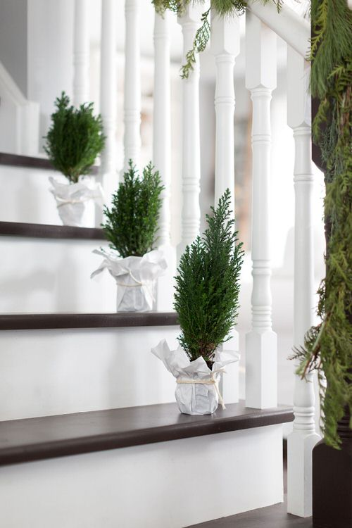 Indoor Garden on the Staircase 7