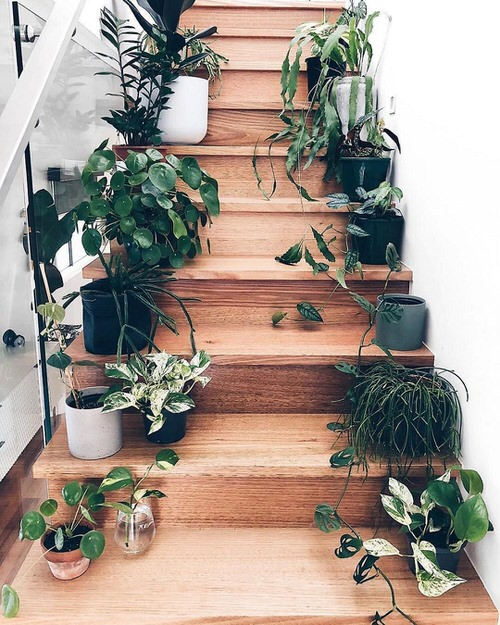 Indoor Garden on the Staircase 3