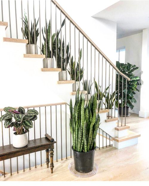 Indoor Garden on the Staircase 4