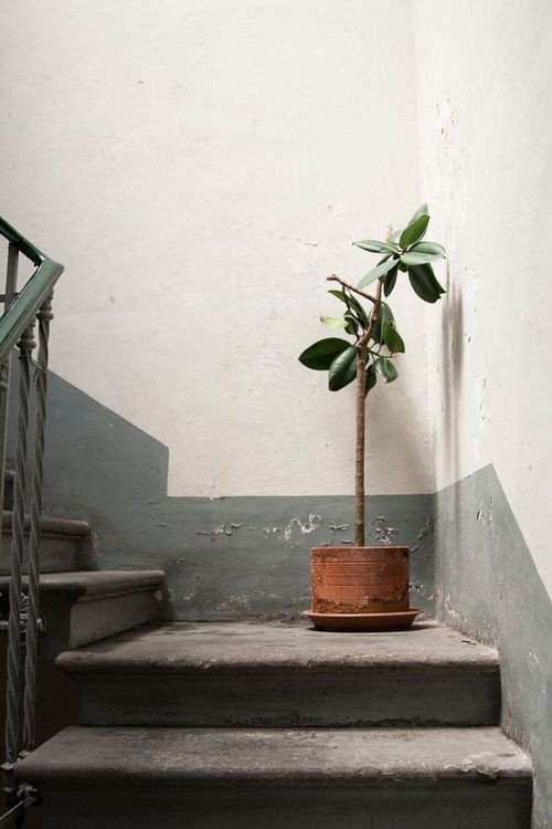 Indoor Garden on the Staircase 5