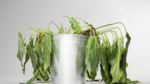 Quick Hacks for Dying Plants