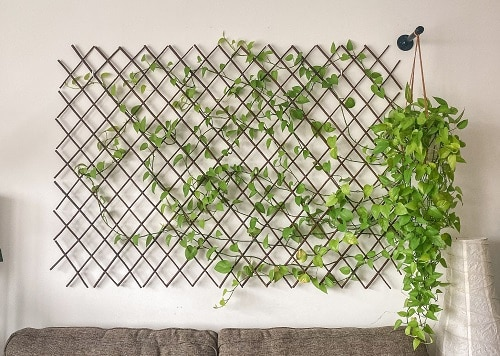Want to create a living wall indoors or outdoors? Discover the names ofsome of the Best Plants for a Vertical Wall in this list to try!