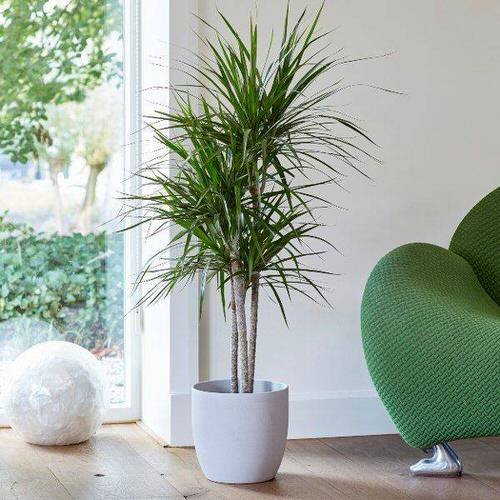 Really Beautiful Drought Tolerant Houseplants 6