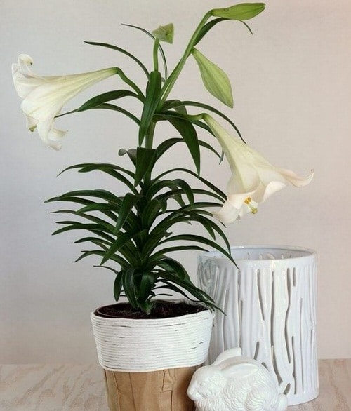 DIY Houseplant Pots Ideas and Makeover 7