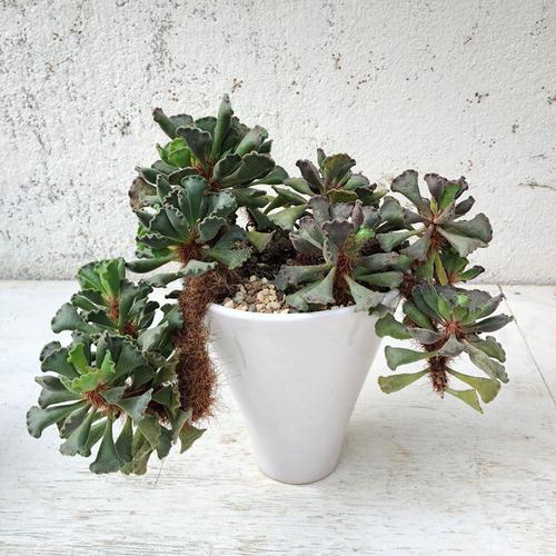 Succulents with Unique Shapes and Patterns 7