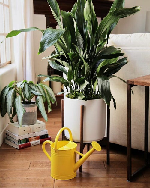 Really Beautiful Drought Tolerant Houseplants 10