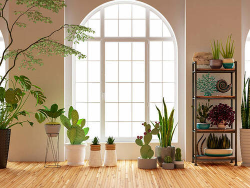 Best House Plants Home Pictures for Inspiration