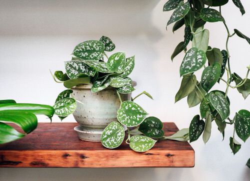 Indoor Plants for a Minimalist Home 2