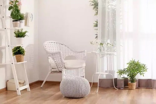 Best House Plants Home Pictures for Inspiration 10