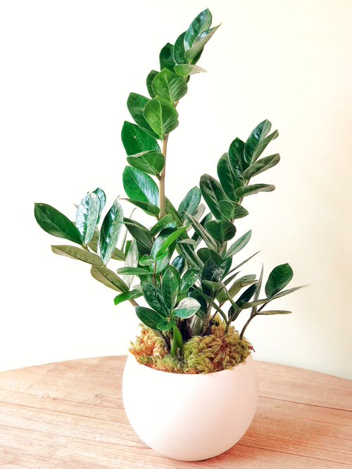 Really Beautiful Drought Tolerant Houseplants 12