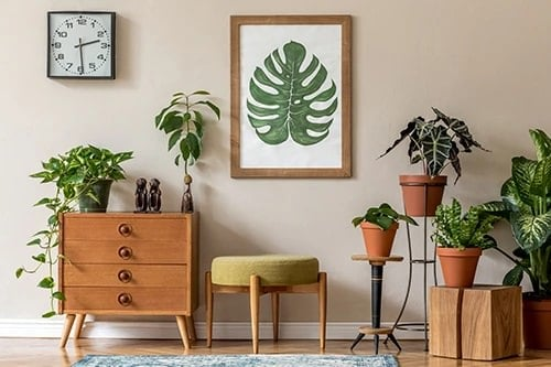 Best House Plants Home Pictures for Inspiration 14